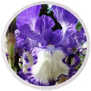 Office Art Prints Irises Purple White Iris Flowers 39 Giclee Prints Baslee Troutman Round Beach Towel