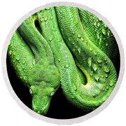 Oh So Green Viper Round Beach Towel