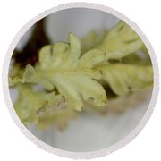 Oh So Small Oak Leaves Round Beach Towel