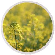 Oilseed Rape Round Beach Towel
