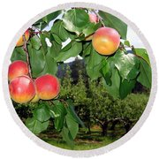 Okanagan Apricots Round Beach Towel by Will Borden