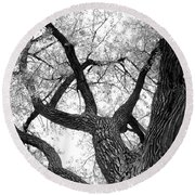 Old Cottonwood Tree Round Beach Towel