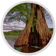 Old Cypress Trunk Round Beach Towel
