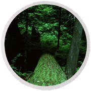Old Growth Forest At Lost Lake On Mount Hood Round Beach Towel