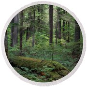 Old Growth Forest Round Beach Towel