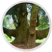 Old Huge Tree Round Beach Towel