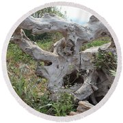 Old Stump At Gold Beach Oregon 1 Round Beach Towel