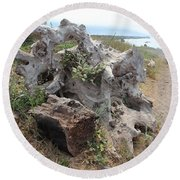 Old Stump At Gold Beach Oregon 5 Round Beach Towel