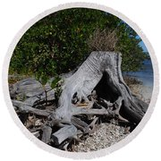 Old Stump Round Beach Towel