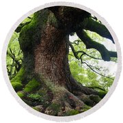 Old Tree In Kyoto Round Beach Towel