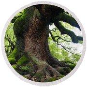 Old Tree In Kyoto Round Beach Towel by Carol Groenen