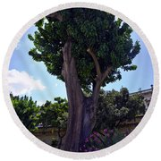 Old Tree In Palermo Round Beach Towel