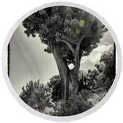 Old Tree In Sicily Round Beach Towel