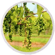 Old York Winery Grapes Round Beach Towel