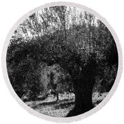 Olive Trees In Italy 2 Round Beach Towel