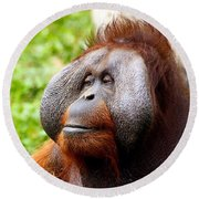 Ollie The Orangutang Round Beach Towel