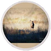 One Cute Deer Round Beach Towel