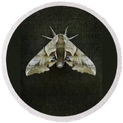 One Eyed Sphinx Moth Round Beach Towel