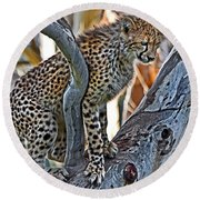 One Little Cheetah Sitting In A Tree Round Beach Towel