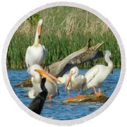 One Sassy Pelican And Friends, West Central Minnesota Round Beach Towel