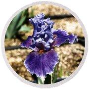 One Sole Iris In Bloom Round Beach Towel