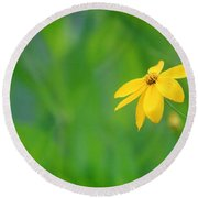 One Yellow Coreopsis Flower Round Beach Towel