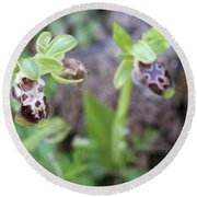 Ophrys Kotschyi Wild Orchid Plant. Round Beach Towel