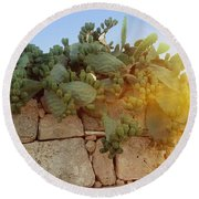 Opuntia Cactus In The Sunset Round Beach Towel