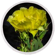 Opuntia Robusta Flower Round Beach Towel