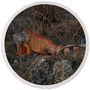 Oranage Iguana Round Beach Towel