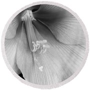 Orange Amaryllis Hippeastrum Bloom 12-29-10 Bw Round Beach Towel