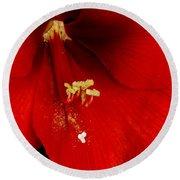 Orange Amaryllis Hippeastrum Bloom 12-29-10 Round Beach Towel