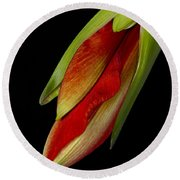 Orange Amaryllis Hippeastrum In The Beginning 2-21-10 Round Beach Towel