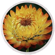 Orange And Yellow Strawflower Round Beach Towel