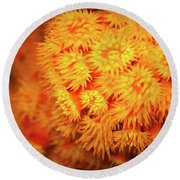 Orange Anemones Round Beach Towel