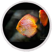 Orange Aquarium Fish In Zoo Round Beach Towel