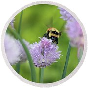 Orange-belted Bumblebee On Chive Blossoms Round Beach Towel