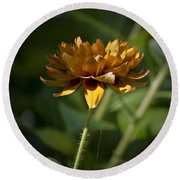 Orange Blanket Flower Round Beach Towel