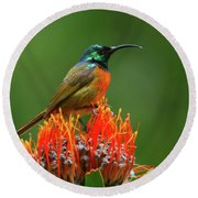 Orange-breasted Sunbird On Protea Blossom Round Beach Towel