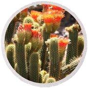 Orange Cactus Blooms Round Beach Towel