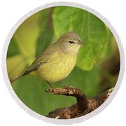 Orange Crowned Warbler Round Beach Towel