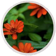 Orange Daisey's Round Beach Towel