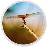 Orange Dragonfly Wings I Round Beach Towel