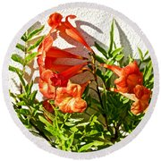 Orange Trumpet Flowers At Pilgrim Place In Claremont-california  Round Beach Towel