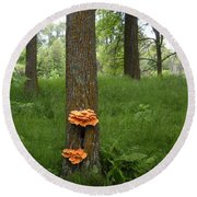 Orange Fungi On A Tree Round Beach Towel