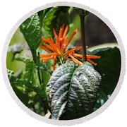 Orange Plants Round Beach Towel