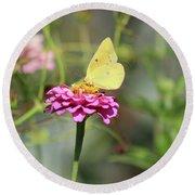 Orange Sulphur Butterfly In Garden Round Beach Towel