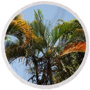 Orange Trees Round Beach Towel