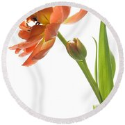 Orange Tulip Round Beach Towel
