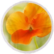 Orange Viola On A Brilliant Spring Day Round Beach Towel